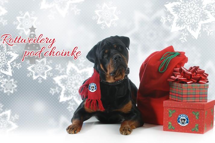 Rottweilery pod choinkę, czyli świąteczna akcja na medal